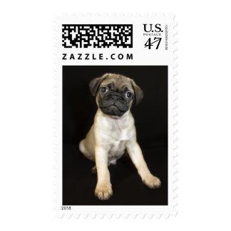 Amazing Little Pug Puppy Postage