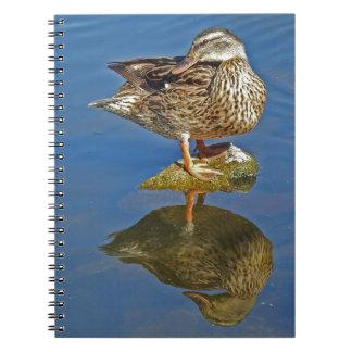 Amazing Mallard Hen Duck Reflection Spiral Notebook