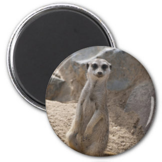 Amazing Meerkat Magnet