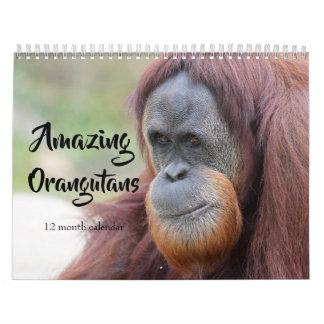 Amazing Orangutans 2019 Calendar