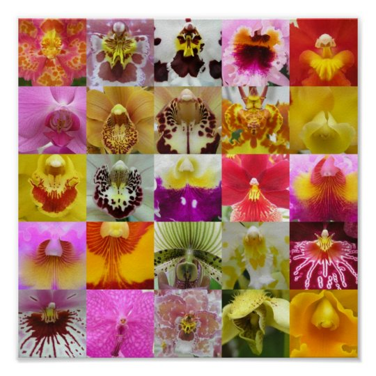 Amazing Orchids Poster