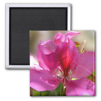 Amazing pink tropical tree flower magnet