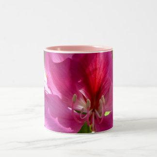 Amazing pink tropical tree flower coffee mug