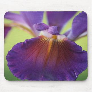 Amazing Purple Iris Close Up Mousepad