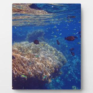 amazing red sea photo plaque