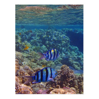 amazing red sea postcard