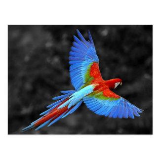 Amazing Scarlet Macaw en flight Postales
