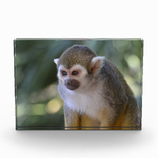 Amazing Squirrel Monkey Acrylic Award