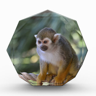 Amazing Squirrel Monkey Award
