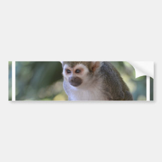 Amazing Squirrel Monkey Bumper Sticker