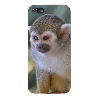 Amazing Squirrel Monkey Case For iPhone SE/5/5s