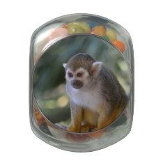 Amazing Squirrel Monkey Glass Candy Jars at Zazzle