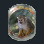 "Amazing Squirrel Monkey Glass Jar<br><div class=""desc"">Really sweet amazing squirrel monkey sitting on a rope.</div>"