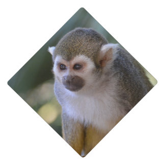 Amazing Squirrel Monkey Graduation Cap Topper