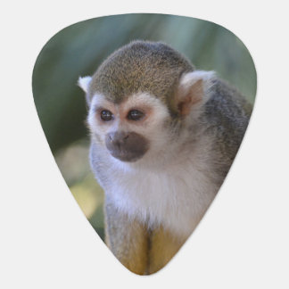 Amazing Squirrel Monkey Guitar Pick