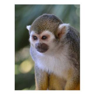 Amazing Squirrel Monkey Postcard