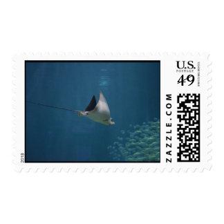 Amazing Stingray Stamp