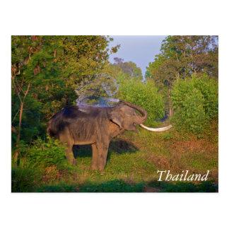 Amazing Thailand Elephant Postcard