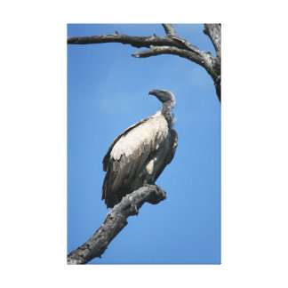 Amazing vulture scavenger bird sitting in a tree canvas print