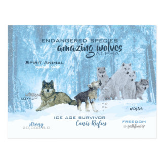 Amazing Wolves Typography | Personalized Postcard