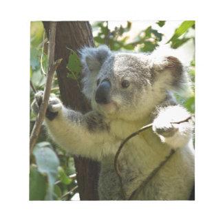 Amazingly cute baby koala in a tree note pad