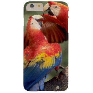 Amazon, Brazil. Pair of Scarlet Macaws (Ara Barely There iPhone 6 Plus Case
