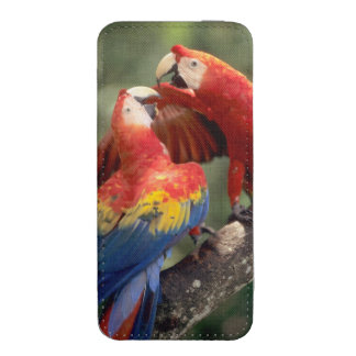Amazon, Brazil. Pair of Scarlet Macaws (Ara iPhone 5 Pouch