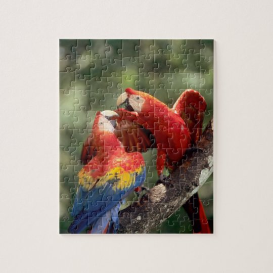 Amazon, Brazil. Pair of Scarlet Macaws (Ara Jigsaw Puzzle