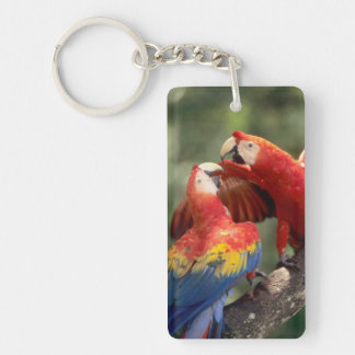 Amazon, Brazil. Pair of Scarlet Macaws (Ara Keychain