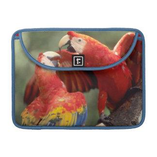 Amazon, Brazil. Pair of Scarlet Macaws (Ara Sleeves For MacBooks