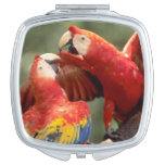 Amazon, Brazil. Pair of Scarlet Macaws (Ara Makeup Mirror