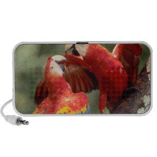 Amazon, Brazil. Pair of Scarlet Macaws (Ara Portable Speakers