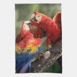 Amazon, Brazil. Pair of Scarlet Macaws (Ara Towel
