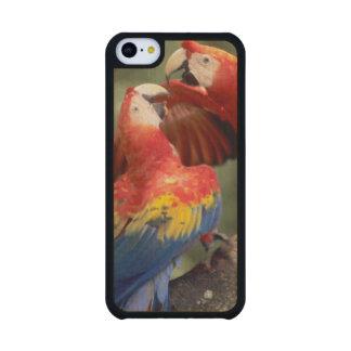 Amazon, Brazil. Pair of Scarlet Macaws (Ara Carved® Maple iPhone 5C Slim Case
