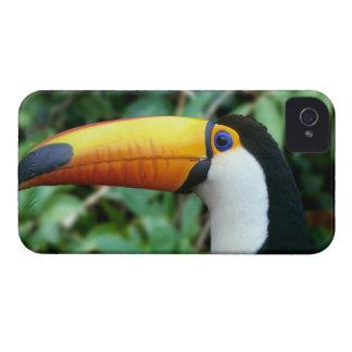Amazon, Brazil. Yellow-beaked toucan with white iPhone 4 Case