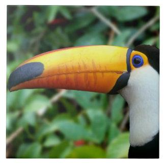 Amazon, Brazil. Yellow-beaked toucan with white Ceramic Tile