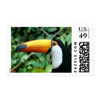 Amazon, Brazil. Yellow-beaked toucan with white Stamp