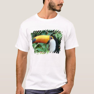 Amazon, Brazil. Yellow-beaked toucan with white T-Shirt