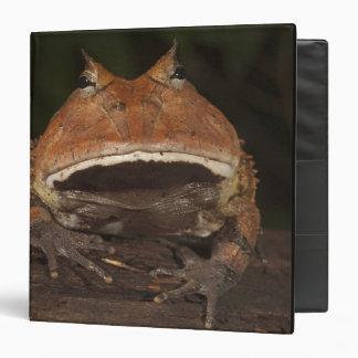 Amazon Horned Frog Ceratophrys cornuta). Binder