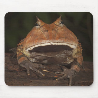 Amazon Horned Frog Ceratophrys cornuta). Mouse Pad