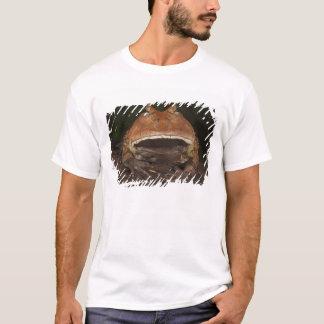 Amazon Horned Frog Ceratophrys cornuta). T-Shirt
