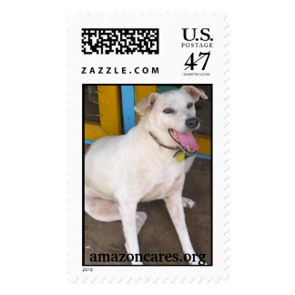 Amazon Humane Society Custom Postage Stamp