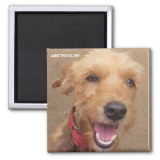 Amazon Humane Society Magnet: Precious Dog Series-
