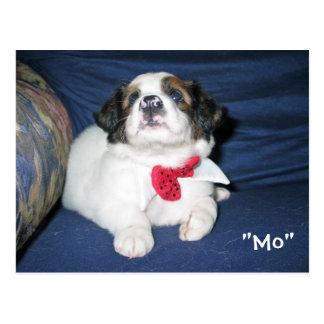 Amazon Humane Society Postcard: Precious Dog Serie