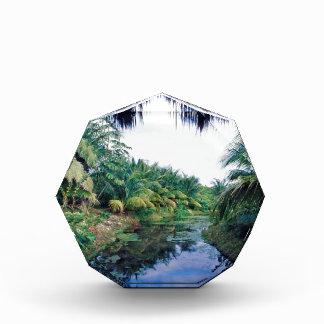 Amazon Jungle River Landscape Acrylic Award