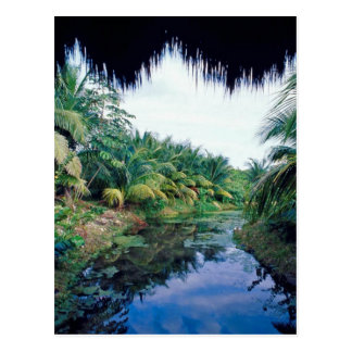 Amazon Jungle River Landscape Postcard