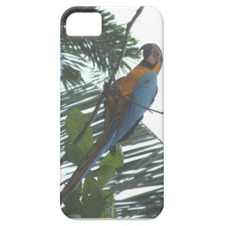 Amazon Macaw iPhone SE/5/5s Case