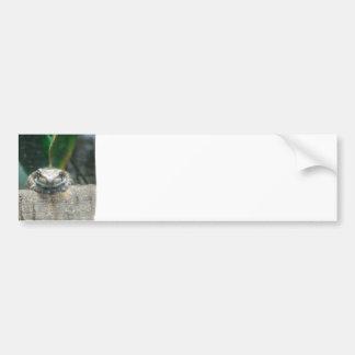 Amazon Milk Frog Bumper Sticker