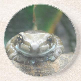 Amazon Milk Frog Coaster