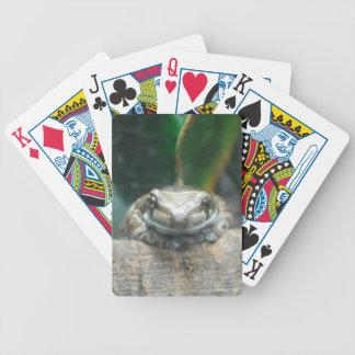 Amazon Milk Frog Deck of Cards